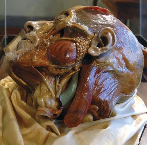"Г. Зумбо. Голова, 18-й век, Музей ""La Specola"", Флоренция, Италия"